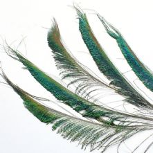 Peacock Sword Feather 30cm Long